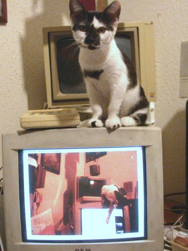 Kitten on monitor sitting over image of kitten playing with screen
